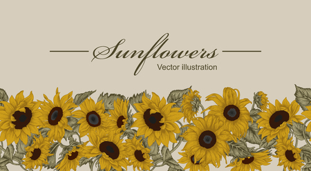 Sunflowers. Vector illustration in vintage style. Seamless background. Ilustração
