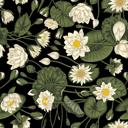Lotus and water lilies, Water plants. Vector illustration in vintage style. Vegetable drawing. Vector seamless background with plant pattern.