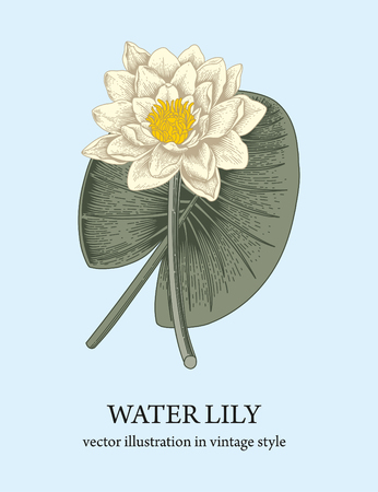 Water lily. Beautiful water flower. An ancient plant. 免版税图像 - 122106688