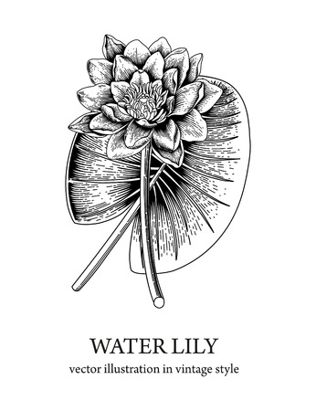 Water lily. Beautiful water flower. An ancient plant.