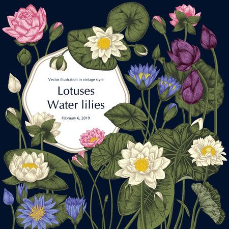 Loto e ninfee, piante acquatiche. Illustrazione vettoriale in stile vintage. Disegno vegetale.