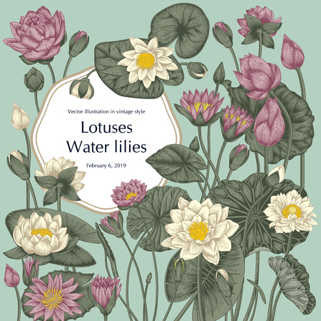 Lotus and water lilies, Water plants. Vector illustration in vintage style. Vegetable drawing.