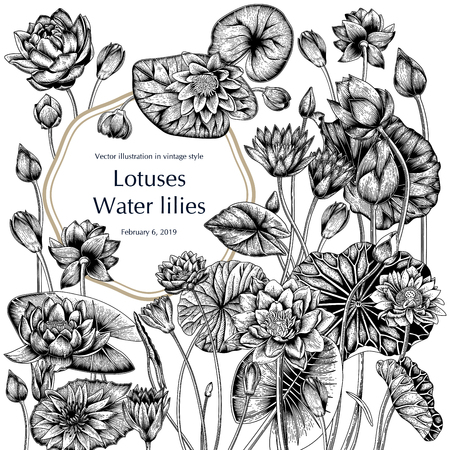 Lotus and water lilies, Water plants. Vector illustration in vintage style. Vegetable drawing. 免版税图像 - 122107022
