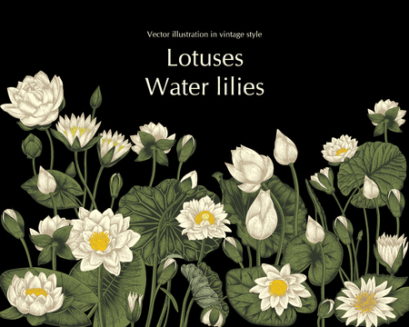 Lotus and water lilies, Water plants. Vector illustration in vintage style. Vegetable drawing. 免版税图像 - 122107025