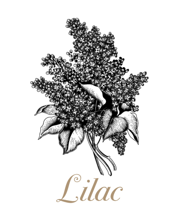 Lilac. Branches with flowers. Spring flowers. Plants in parks and gardens. Holiday card.