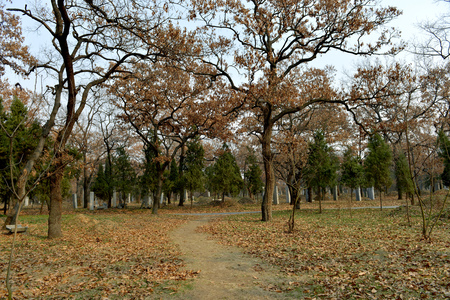 the silence of the world: Cemetery of Confucius