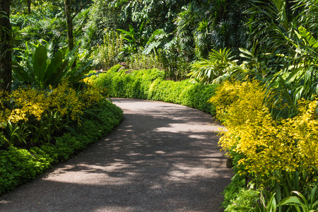 garden path with a frame of yellow orchids