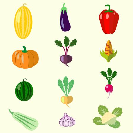 beets: set of vegetables, melon, squash, beets, peppers, Illustration