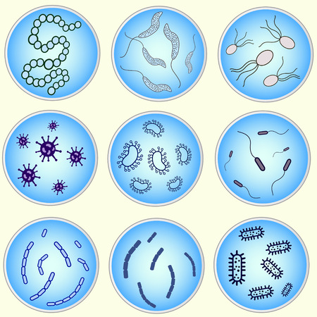 petri: stylized image of bacteria in a petri dish