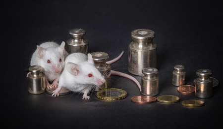economic activity: two small  white laboratory mice with weights and coins on a gray background. the concept of economic activity