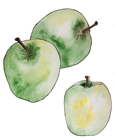 Hand drawn watercolor green apples. isolated on white. Design for  invitation, wedding card.