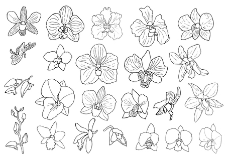 Hand drawn set of orchid flowers and floral elements. Isolated on white. Black and white vector illustration.