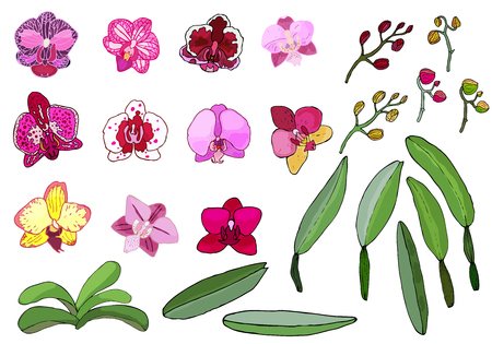 Hand drawn set of orchid flowers and floral elements. Isolated on white.Colored vector illustration. Ilustrace