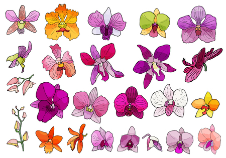 Hand drawn set of orchid flowers and floral elements. Isolated on white.Colored vector illustration. Vettoriali