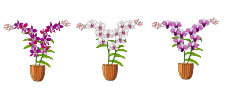 Hand drawn set of orchids in flower pots. Isolated on white.Colored vector illustration. Ilustrace