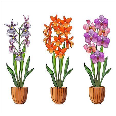 Hand drawn set of orchids in flower pots. Isolated on white.Colored vector illustration. Illustration