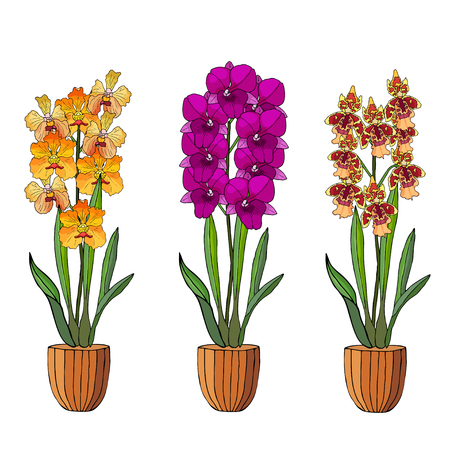 Hand drawn set of orchids in flower pots. Isolated on white.Colored vector illustration. Ilustração