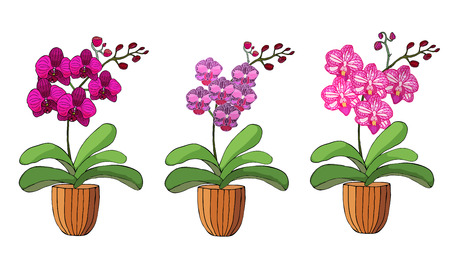 Hand drawn set of orchids in flower pots. Isolated on white.Colored vector illustration. Vettoriali