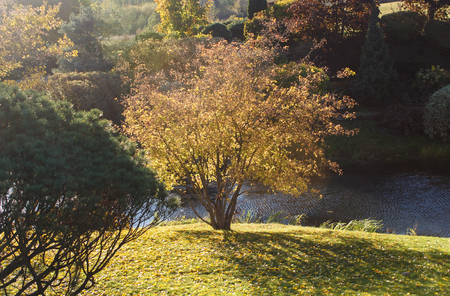 Park with green lawn, trees, hedges, trimmed bushes in autumn. Modern landscape  design. Autumn tree with yellow leaves.
