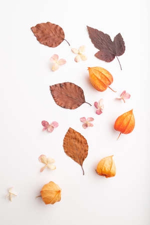 Composition with yellow and brown beech autumn leaves, physalis and hydrangea flowers, mockup on white background. Blank, flat lay, top view, still life, close up. Zdjęcie Seryjne