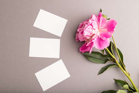 White business card with pink peony flowers on gray pastel background. top view, flat lay, copy space, still life. Breakfast, morning, spring concept.