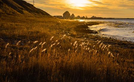golden: Golden sunrise