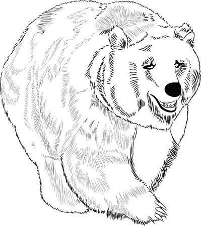 oso negro: Dibujado a mano oso lineart