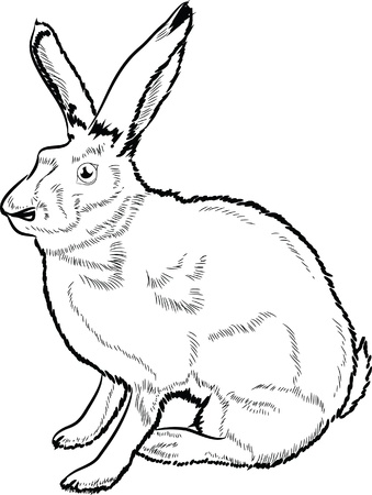 Hand drawn hare lineart  Illustration