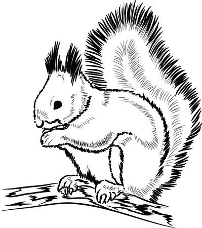 lineart: Hand drawn squirrel lineart  Illustration