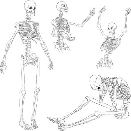 Esqueleto humano en diferentes poses boceto activo
