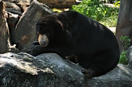 a bear on the stone. Stock Photo