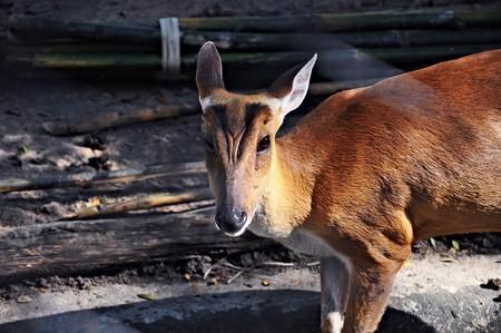 a deer in sunlight