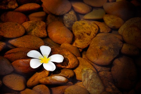 calm background: A plumeria on clear lake. Stock Photo