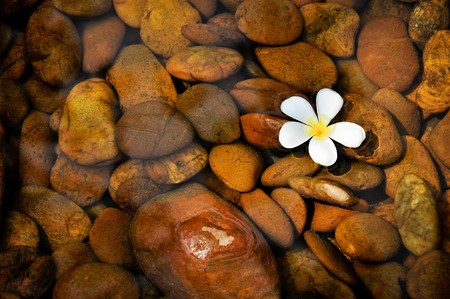 A plumeria on clear water.