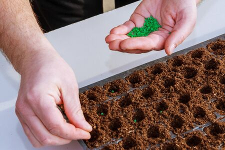 Gardener's hand seeding pepper seeds in the ground