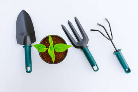 Vegetable seedlings and garden tools on white background