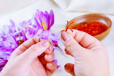 Process of separating the saffron strands from the rest of the flower. Preparing saffron threads for drying before using in cooking, cosmetology or medicine.