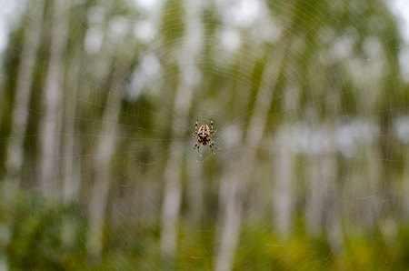 spider and his net in forest