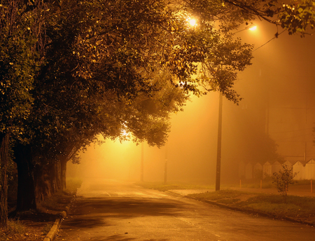 city streets: Foggy street and trees in yellow light at night