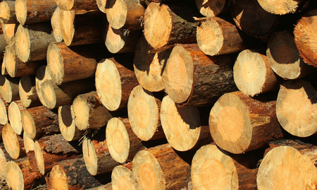 pile of logs: Background of dry firewood logs in a pile Stock Photo