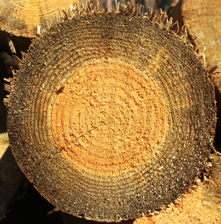 sawn: Background of dry sawn pine logs