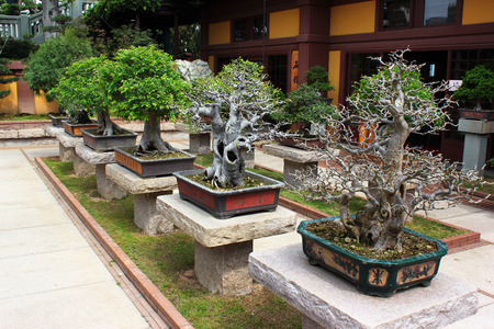 HONG KONG, MARCH 22, 2012:  Bonsai trees in Chinese Classical Nan Lian Garden, designed in the Tang Dynasty style located at Diamond Hill, Kowloon, Hong Kong.
