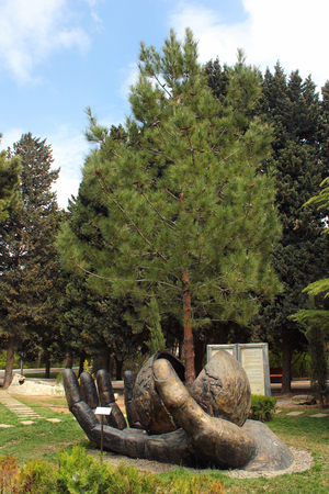 sprouted: BAKU, AZERBAIJAN - APRIL 25, 2017: Hand holds growing pine tree, sprouted from a seed. Composition in Botanical Garden of the Azerbaijan National Academy of Sciences in Baku.