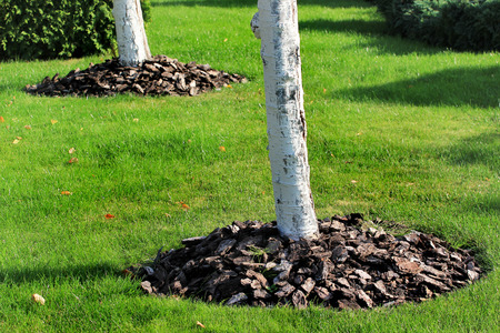 Chips of wooden bark used for mulching the tree trunk Stockfoto