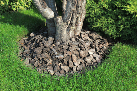 Chips of wooden bark used for mulching the ground around tree trunk