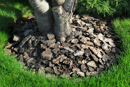 Chips of wooden bark used for mulching the tree trunk Stock Photo