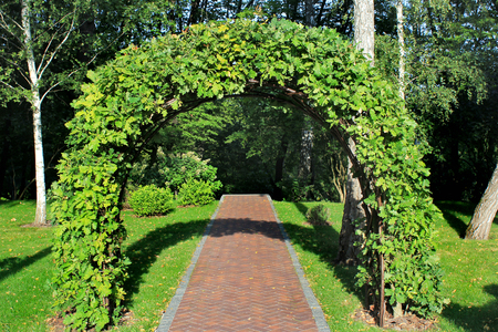 intertwined: Garden arch made of intertwined oak branches