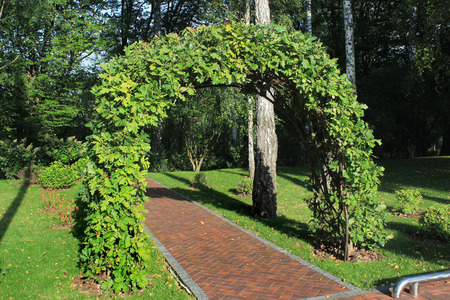 Garden arch made of intertwined oak branches