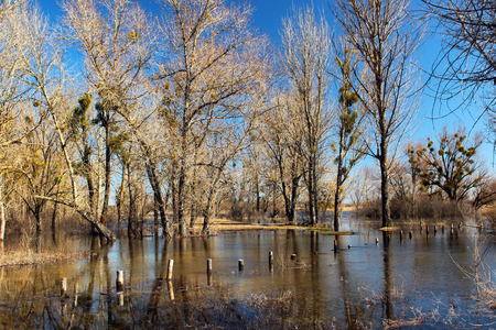 High water and seasonal flood in springtime after melting of snow