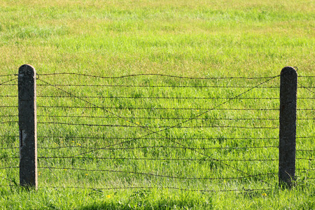 Barbed wire fence on green grass